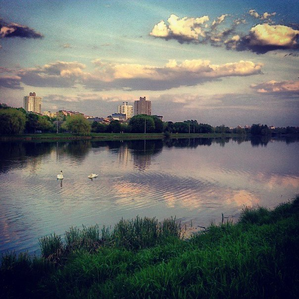 Олипа_Лебединое озеро