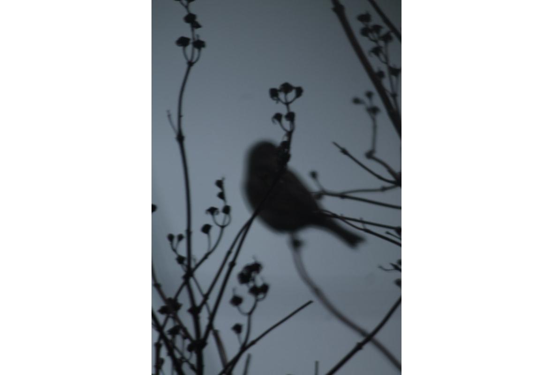Птичий ключ