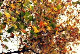 Влюбившийся в осень щенок