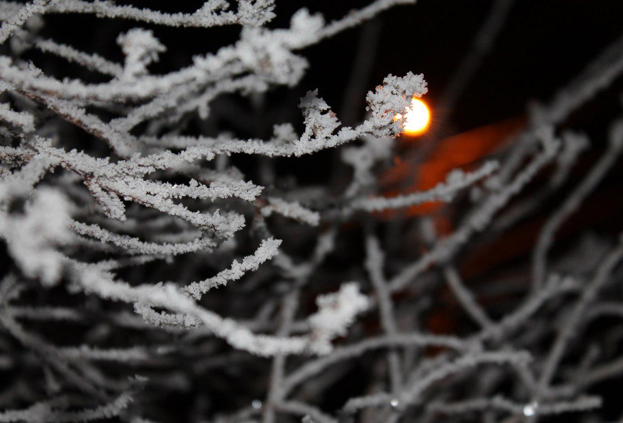 В эту зимнюю ночь