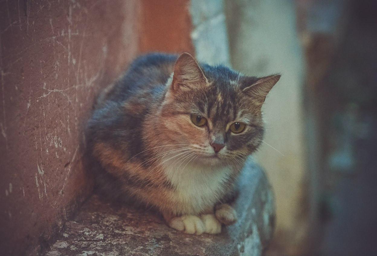 Стар кот, а масло любит