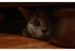 кот шрёдингера