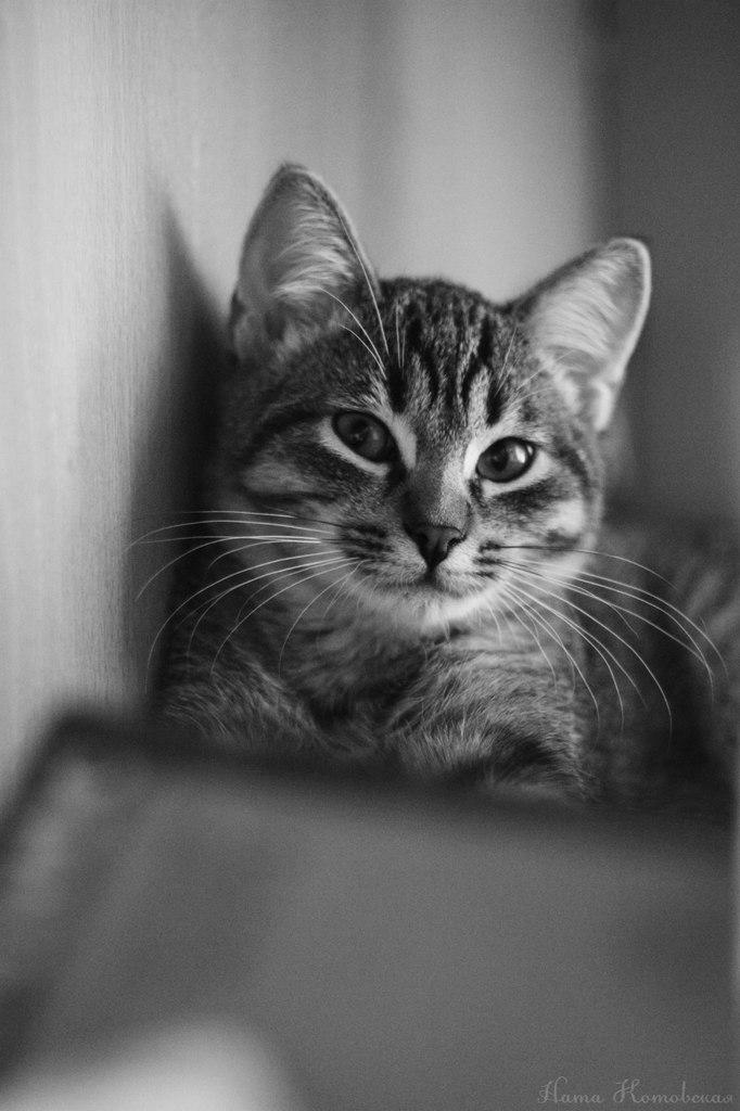 Лирические стихи о котах