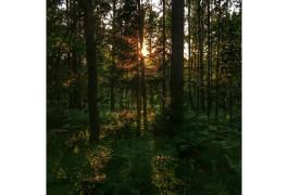 Дом у границы леса, фото Pasgos