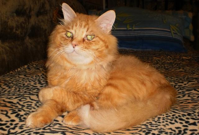 фото кота Тишки