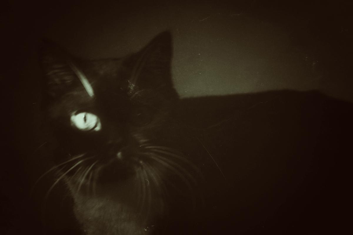 черная кошка и луч света