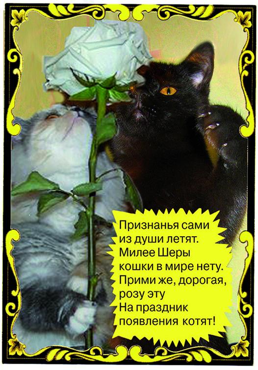 свидание котов романтика любовь
