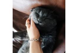 о пользе котов