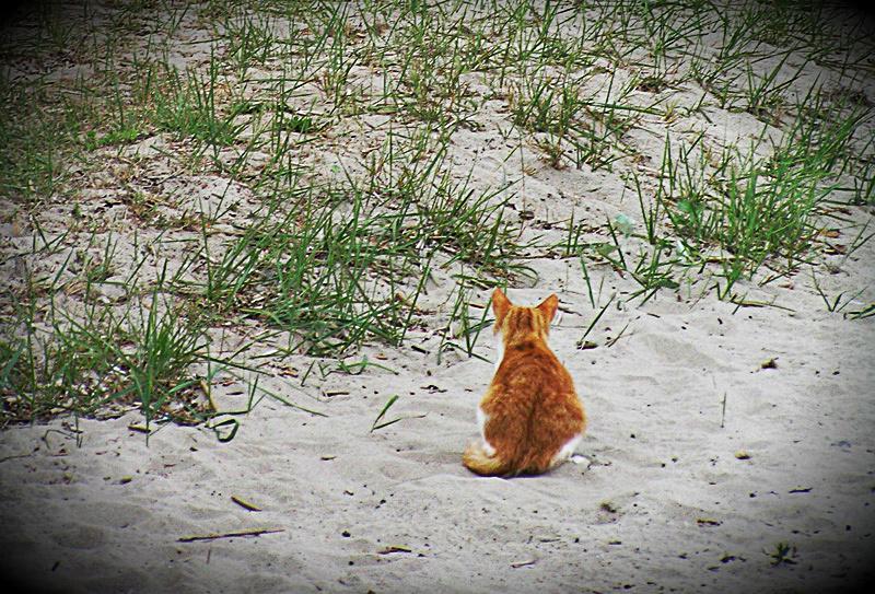 рыжий котенок