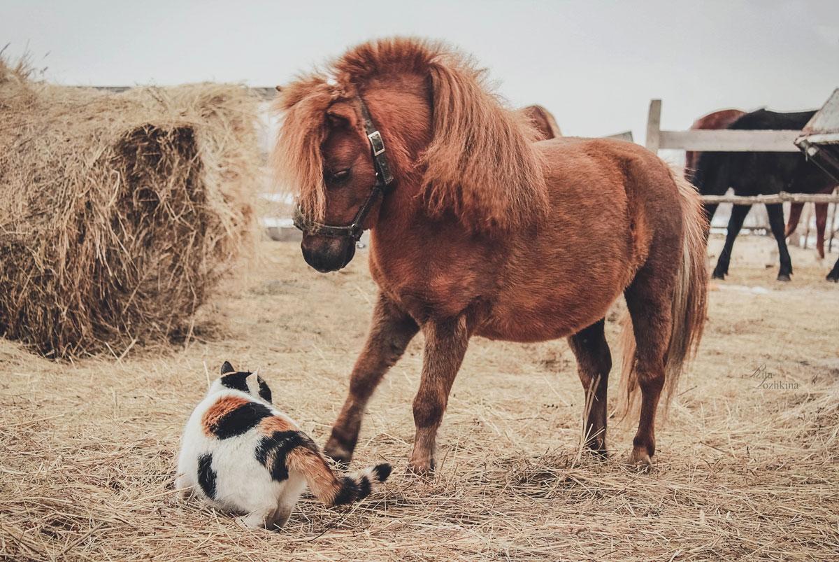 рыжий кот и лошадь