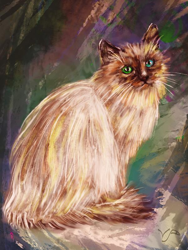 разноцветные глаза кошки
