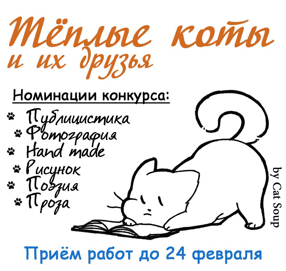 теплые коты конкурс