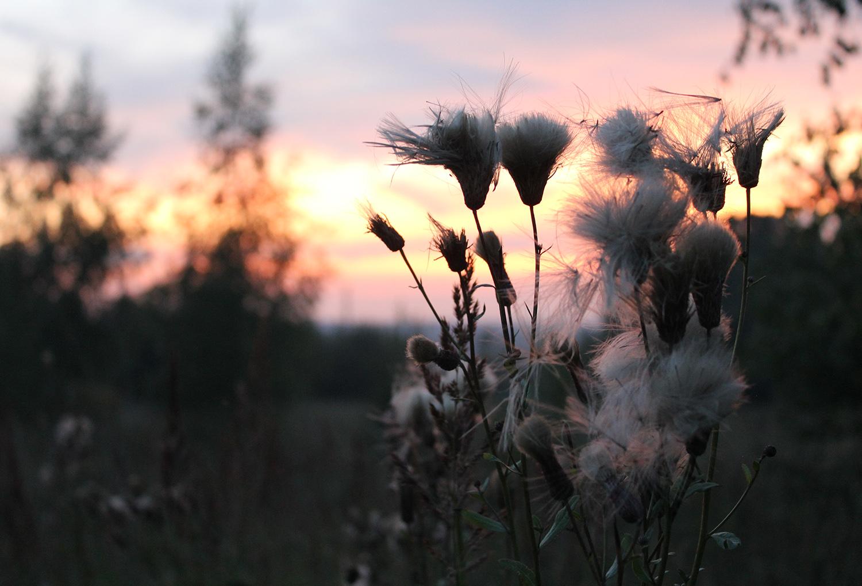 Летний закат