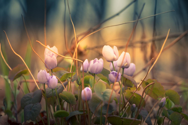 Конкурс «Вальс цветов»-2020. Встречаем весну!